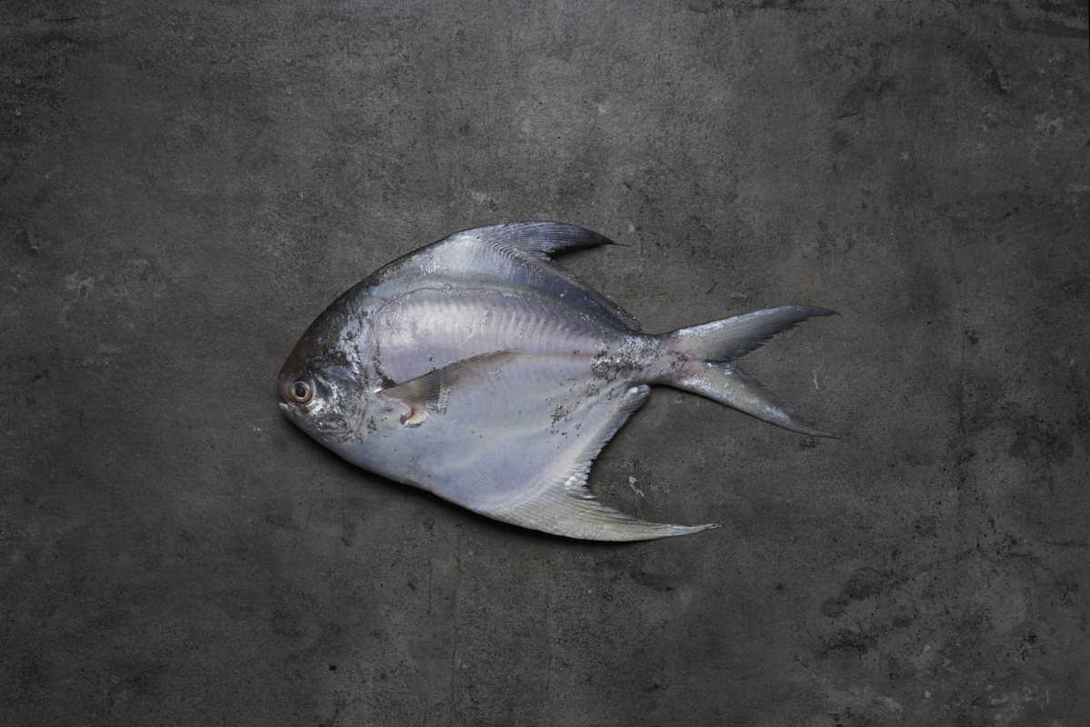 mrs l pomfret Popular sea fish recipe, is a very simple & easy way to cook pomfret fish curry recipe so you can try this recipe very easily at your home.